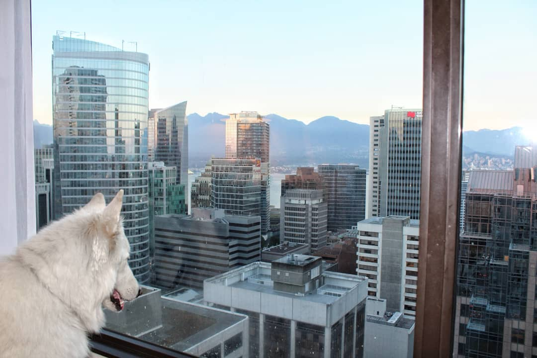 Mark and Mya's Adventure to Vancouver